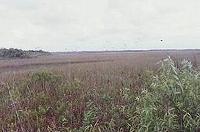 s-エバーグレーズ国立公園.jpg