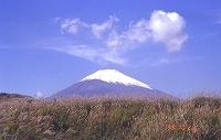 s-富士山(ススキ)2m.jpg