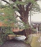s-木の根橋.jpg