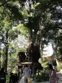s-来宮大クス1DSC02555.jpg