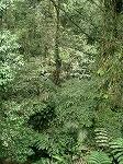 s-熱帯林.jpg