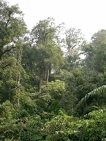 s-生命の宝庫熱帯林0765.jpg